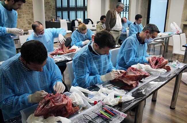 Practicando en una cabeza de animal durante el Curso de Implantología y Periodoncia de Fundación Clínica Pardiñas