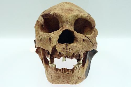 Craneo Atapuerca