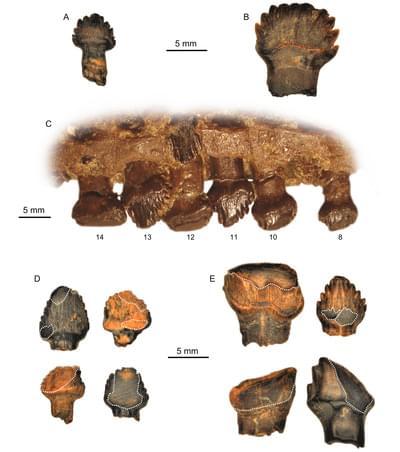 El reflejo de la alimentación en los dientes de los dinosaurios