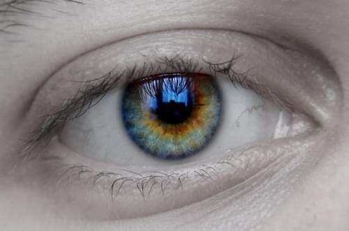 Las células madre de las muelas del juicio pueden ser redirigidas para convertirse en células de la córnea, un avance que podría utilizarse para reparar cicatrices oculares